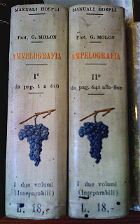 Ampelografia, Prof. Girolamo Molon, 1906